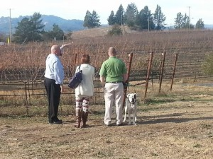 Wine tour clients looking at vineyard in winter