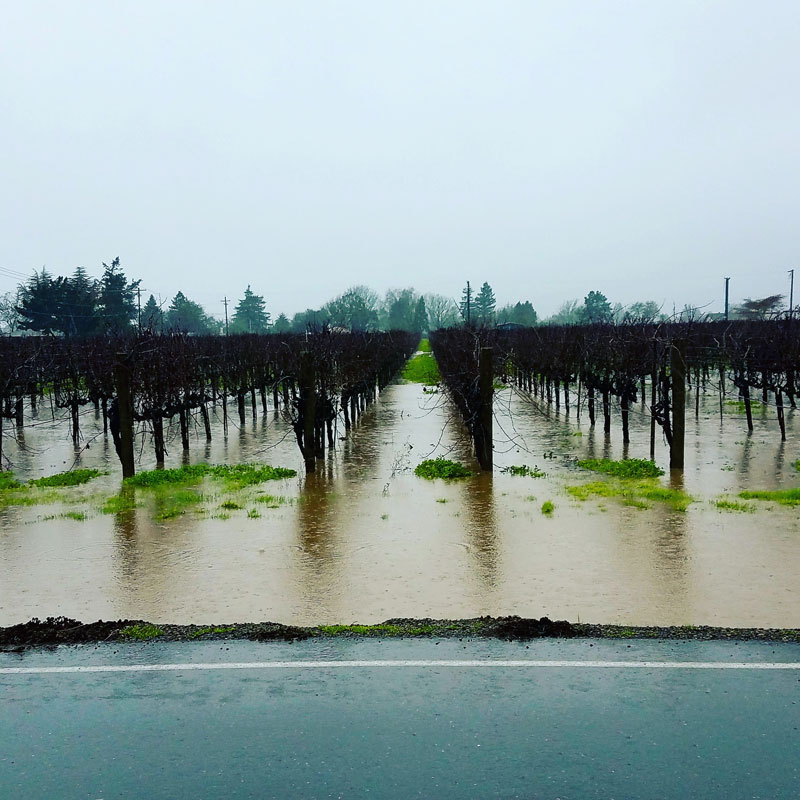 Flooded vineyard Napa
